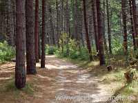 Entdecken Wald Amrum