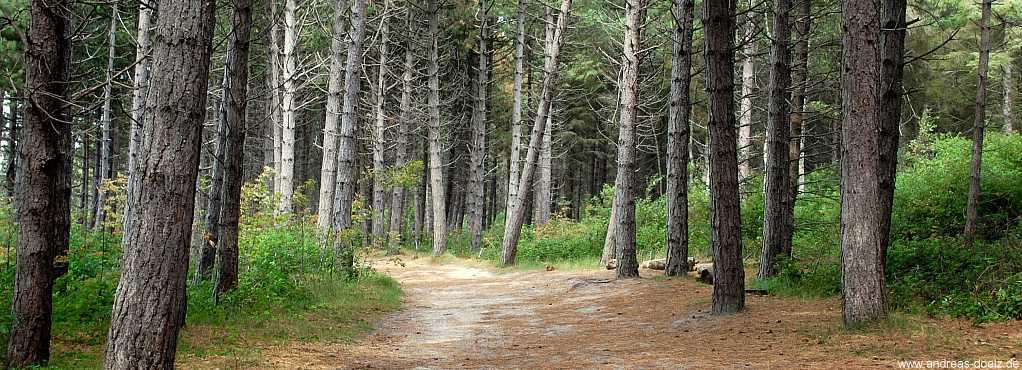 Wald auf Amrum
